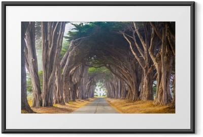 Póster com Moldura Ponto reyes cyress árvore túnel