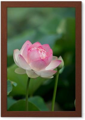 sanglege til vuggestuen 蓮 の 花
