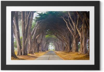 Obrazek w ramie Point reyes cyress tree tunnel