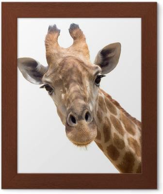 Poster i Ram Giraffe närbild