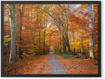 Pathway in the autumn forest Framed Poster